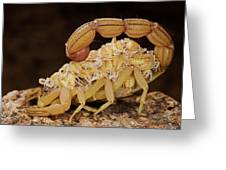 Scorpion Mother Carrying Her Brood Greeting Card