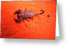 Scorpion Red Sand Sting Insect Greeting Card