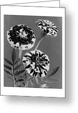 Scotch-stripe Marigolds Greeting Card
