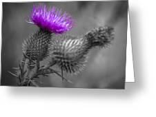 Scotland Calls 1 Greeting Card
