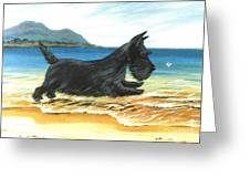 Scottie At Play Greeting Card