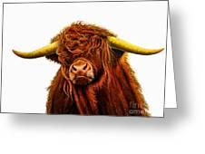 Scottish Highlander Greeting Card