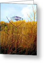 Scottish Thistle On The Firth Greeting Card