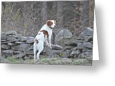 Scout Greeting Card