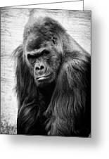 Scowling Gorilla Greeting Card