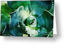 Scratch Agave Greeting Card