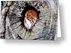 Screech Owl 02 Greeting Card