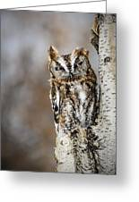 Screech Owl Checking You Out Greeting Card