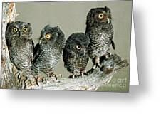 Screech Owl Chicks Greeting Card