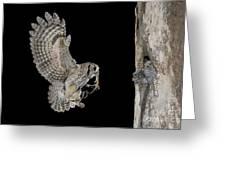 Screech Owl Feeding Owlets Greeting Card