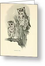 Screech Owls Greeting Card