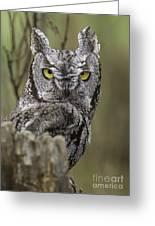 Screen Owl Greeting Card