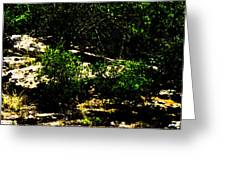 Scrubland Texas Greeting Card