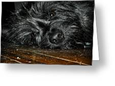 Scruff Greeting Card