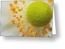 Sea Anemone Abstract Greeting Card