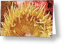 Sea Anenome Stretch Greeting Card by Artist and Photographer Laura Wrede