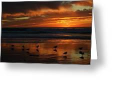 Sea Birds  Leucadia Ca  2013 Greeting Card