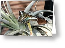Sea Blue Butterfly Two Greeting Card