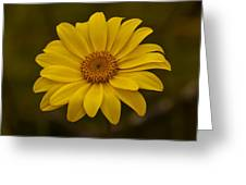 Sea Dahlia Greeting Card