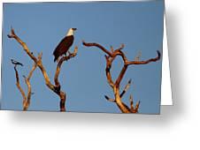 Sea-eagle And The Peewee Greeting Card