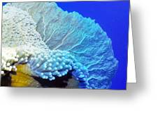 Sea Fans 7 Greeting Card