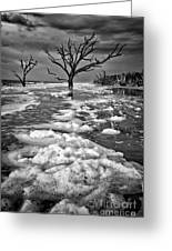 Sea Foam Botany Bay Greeting Card