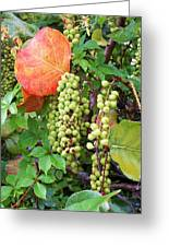Sea Grapes And Poison Ivy Greeting Card