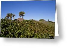 Sea Grapes On A Florida Sand Dune Greeting Card