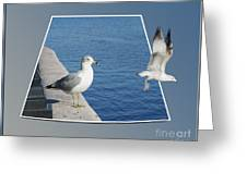 Sea Gull Away Out Of Bounds Greeting Card
