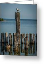 Sea Gull On A Piling Greeting Card