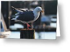 Sea Gull On Break Greeting Card