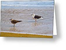 Sea Gull Pair Greeting Card