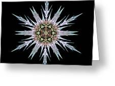 Sea Holly I Flower Mandala Greeting Card