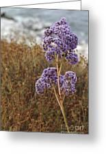 Sea Lavender In La Jolla Greeting Card