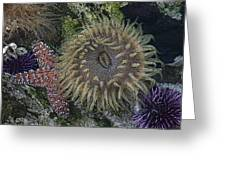 Sea Life Greeting Card