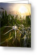 Sea Lily Greeting Card
