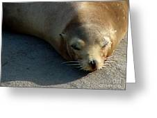 Sea Lion-00178 Greeting Card