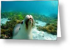 Sea Lion Bubble Blowing Greeting Card