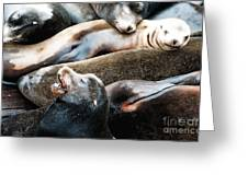 Sea Lion Dreams Greeting Card
