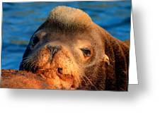 Sea Lion Greeting Card
