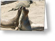 Sea Lion Love From The Book My Ocean Greeting Card by Artist and Photographer Laura Wrede