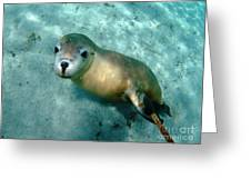 Sea Lion On The Seafloor Greeting Card