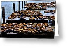 Sea Lions At Pier 39  Greeting Card by Garry Gay
