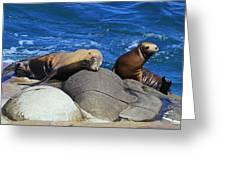Sea Lions Greeting Card