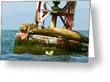 Sea Lions Floating On A Buoy In The Pacific Ocean In Dana Point Harbor Greeting Card