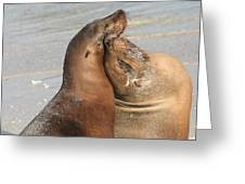 Sea Lions In Love Greeting Card