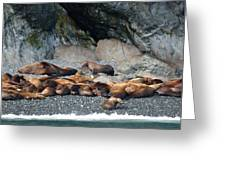 Sea Lions On The Sea Shore Greeting Card