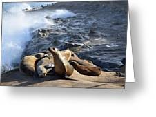 Sea Lions Seek Shelter Greeting Card