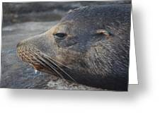 Sea Lions Greeting Card