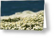 Sea Mayweed And The Sea Greeting Card